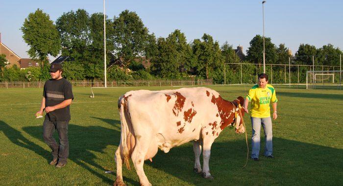TOF: koeschijten in Sittard-Oost